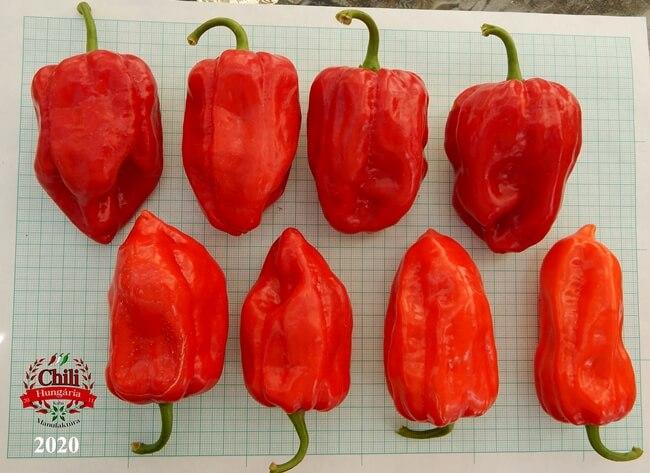 az év chili paprikája