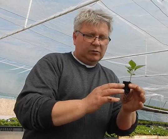 Úton az ökológiai szemléletű termesztés felé III.