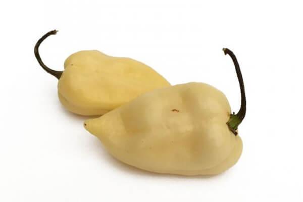 White Habanero